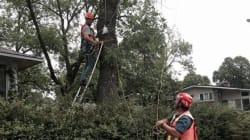 Lutte contre l'agrile du frêne : les citoyens doivent joindre les rangs