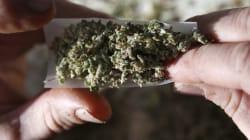 Le cannabis pourrait être couvert par les assurances