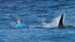 Squalo attacca campione di surf durante la gara. È corpo a corpo