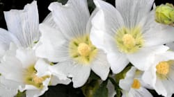 5 Flowers That Will Have You Dreaming About An All-White