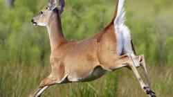 Deer Kills New Brunswick