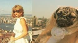 Voici Doug, le chien qui se prend pour Taylor