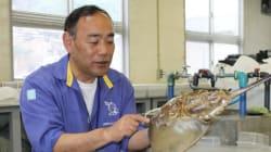 【生きた化石】カブトガニを絶滅の危機から救え!