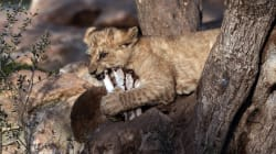 A Athènes, les animaux du zoo sont aussi victimes de