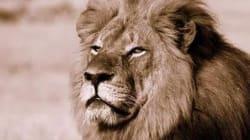 Le dentiste qui a tué le lion Cecil: un obsédé des trophées