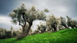 I semi, il suolo e i piccoli agricoltori sono vitali per la rinascita della