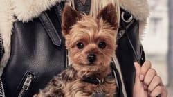 Les chiens d'Ariana Grande et Miranda Kerr en vedette pour Coach