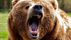 Grizzly Attacks Picnicking Couple West Of