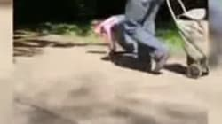 Indignación por el vídeo de una niña paseada con correa y a cuatro