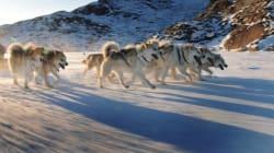 Quebec Pledges Inuit $3M After Sled-Dog