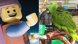 Everything Is Awesome When This Parrot Sings Tegan And
