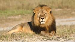 Cecil le lion: l'importance du