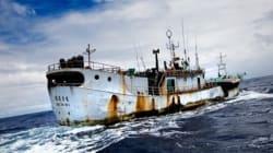 Descontrol en la pesca del atún del