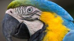 La SPCA saisit 550 oiseaux