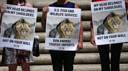 Banning Trophy Hunting Could Put More Animals At Risk: