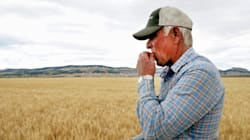 Alberta Ag Minister Won't Declare Drought Emergency Just