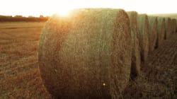 Kind Manitoba Farmer Donates Hay To Alberta's Struggling
