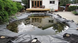 Frogs Kept Jumping Into Her Pool, So She Turned It Into A