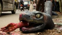 My Anaconda Don't! Giant, Fake Reptile Hopes To Shame Authorities Into Fixing Bengaluru