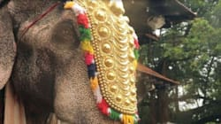 India Must Stop the Exploitation of Elephants in Cultural and Religious