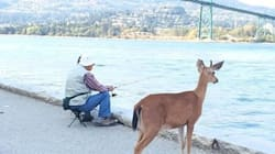 Vancouver's Downtown Deer Has A New