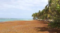 Aux Antilles, les vacanciers délaissent les plages attaquées par les