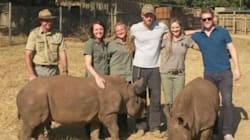 Prince Harry's Rocking A Beard And Hanging Out With Rhinos These