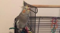 Cet oiseau a tout compris au