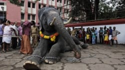 The Daily Mail Expose On Temple Elephants Is Shocking, And