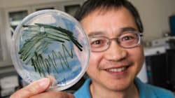 Du plastique sans pétrole, c'est possible grâce à une algue