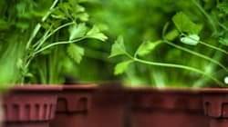 How To Grow Herbs When You Live In An