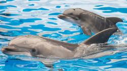 El delfín espía: lo último del