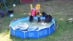Ces ours ont trouvé le moyen de se rafraîchir pendant la