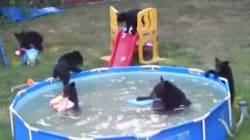 Cette famille d'ours a trouvé le moyen idéal pour se