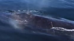 Humpback Whale Gets THIS Close To B.C.