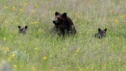 Déçu de ne pas avoir vu d'ours dans un parc naturel, un touriste fait une étrange