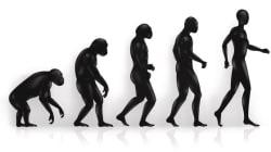 Comment on est passé d'homme-singe à maître du