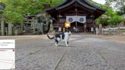 «Cat Street View», une carte interactive à hauteur de