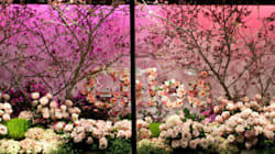 Spring Blooms: Which Flowers To Buy Now And How To Care For