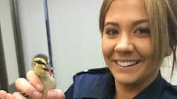 Stand Aside Police Dogs: Ducks, Horses and Chihuahuas Are The Law