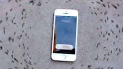 Lo smartphone squilla, le formiche cambiano