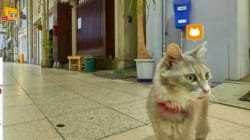 Google Street View For Cats? Japan Pilots Unique New Online
