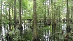 Floride: 10 activités pour découvrir Kissimmee et ses environs