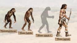 L'Homo naledi: ancêtre ou