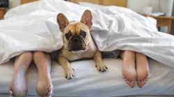 Let Sleeping Dogs Lie: 10 Rules of Bed Etiquette According To My