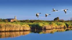 Di tutti i Delta un Po: settembre invita al viaggio fra i canali e le isole del Parco. E a Comacchio è gran festa per