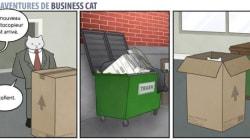 Et si votre patron était un chat