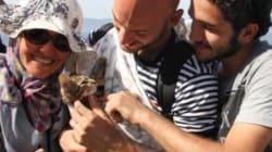 シリア難民の男性は、子猫を抱いてギリシャまで渡った(画像)