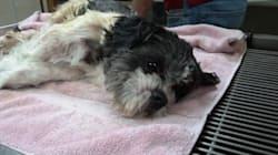 Tiny Dog Abandoned In Diaper Box Near