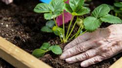 Des jardins thérapeutiques pour aider les malades